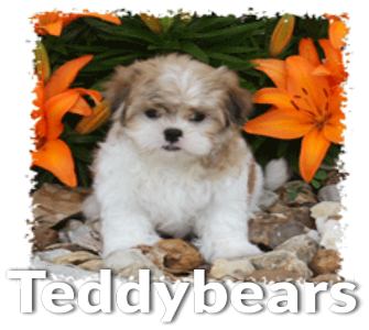Puppies for Sale | Denning Farms Dog Breeder | Puppy Litters